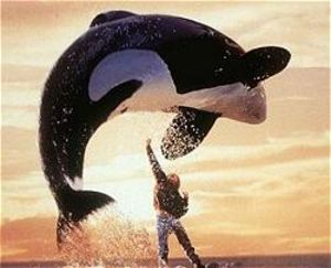 FREE WILLY FOTOS